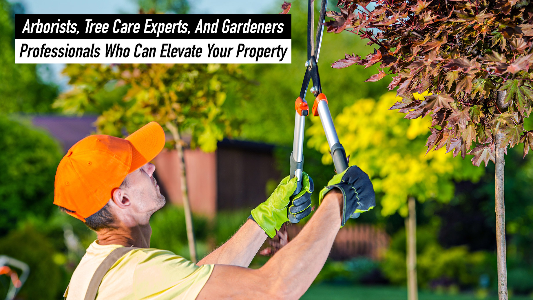 Arborists, Tree Care Experts, And Gardeners – Professionals Who Can Elevate Your Property