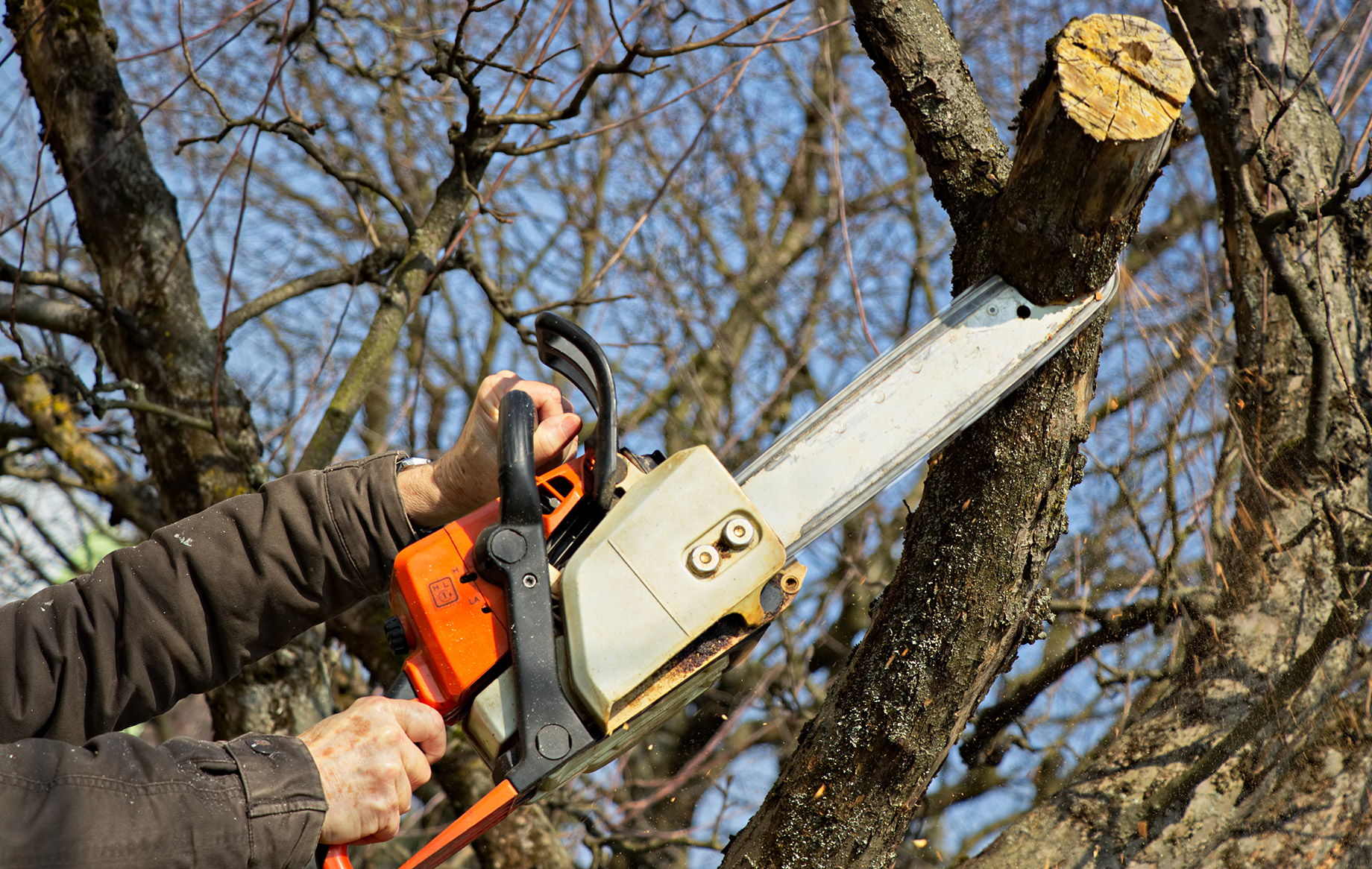 Arborists, Tree Care Experts, And Gardeners