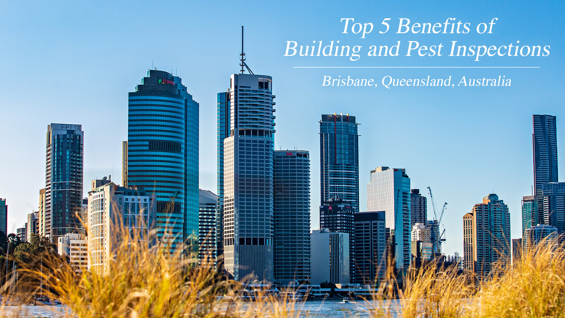 Top 5 Benefits of Building and Pest Inspections in Brisbane, Australia