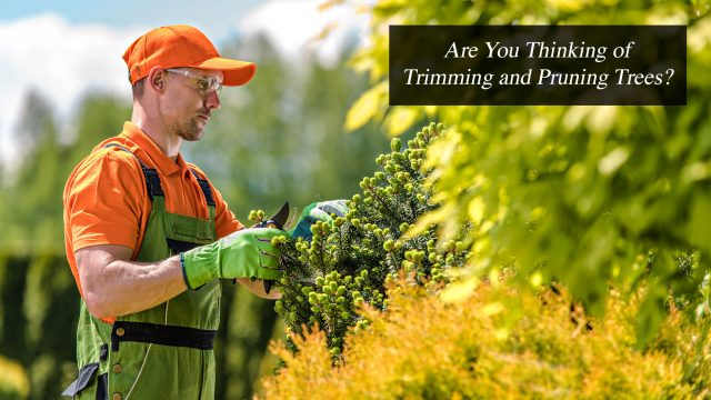 Are You Thinking of Trimming and Pruning Trees?