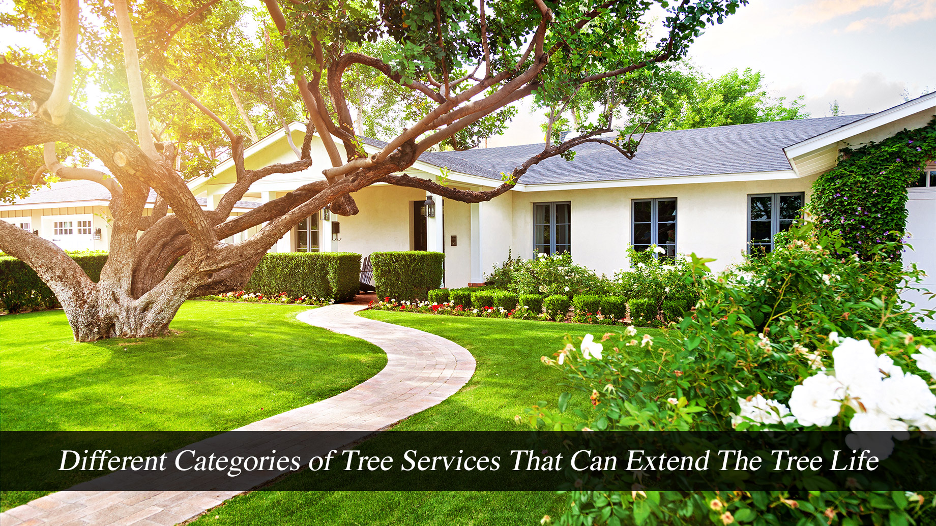 Different Categories of Tree Services That Can Extend The Tree Life