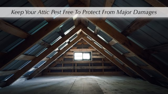 Keep Your Attic Pest Free To Protect From Major Damages