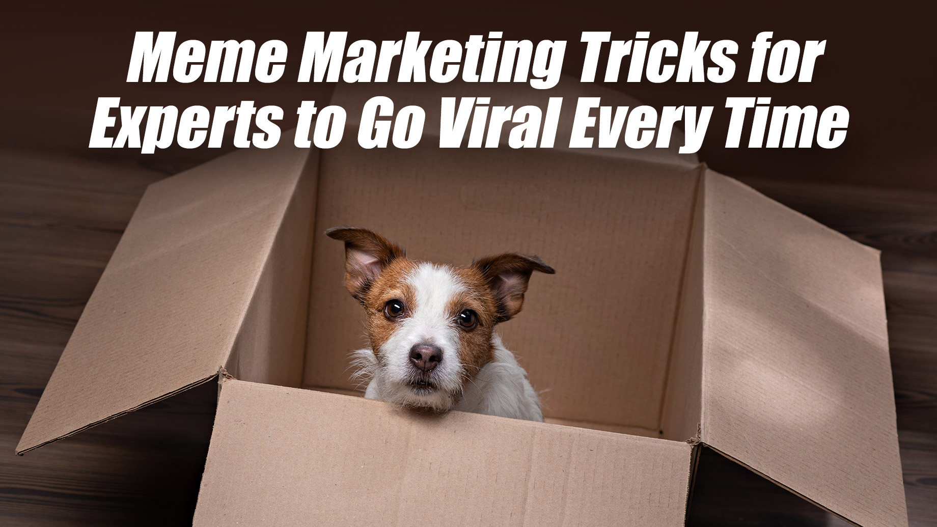 Meme Marketing Tricks for Experts to Go Viral Every Time