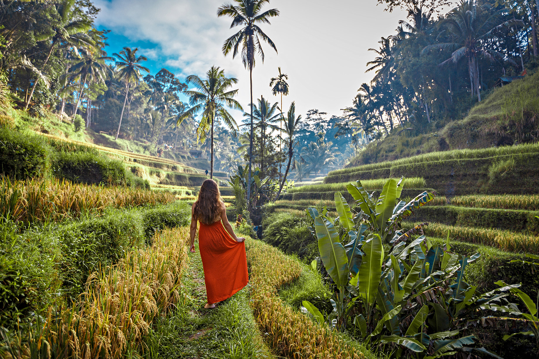 Rice Fields - Tegallalang, Bali, Indonesia