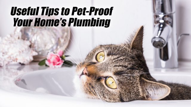 Useful Tips to Pet-Proof Your Home's Plumbing