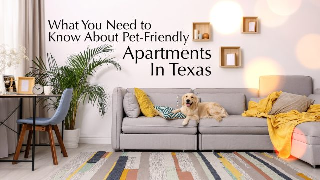 What You Need to Know About Pet-Friendly Apartments in Texas