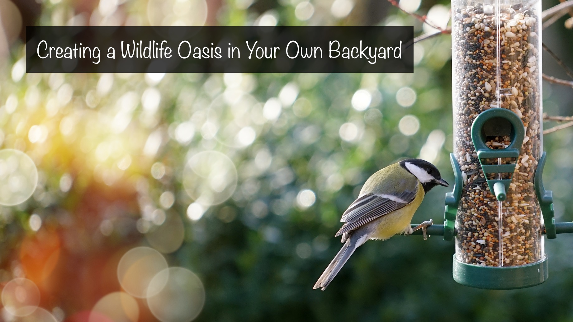 Creating a Wildlife Oasis in Your Own Backyard