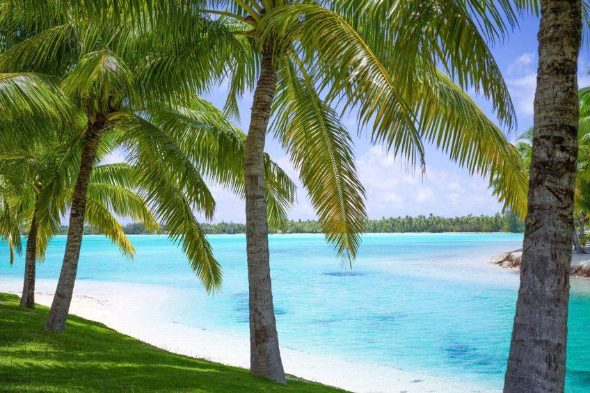 The St. Regis Bora Bora Resort - Bora Bora, French Polynesia - Palm Trees