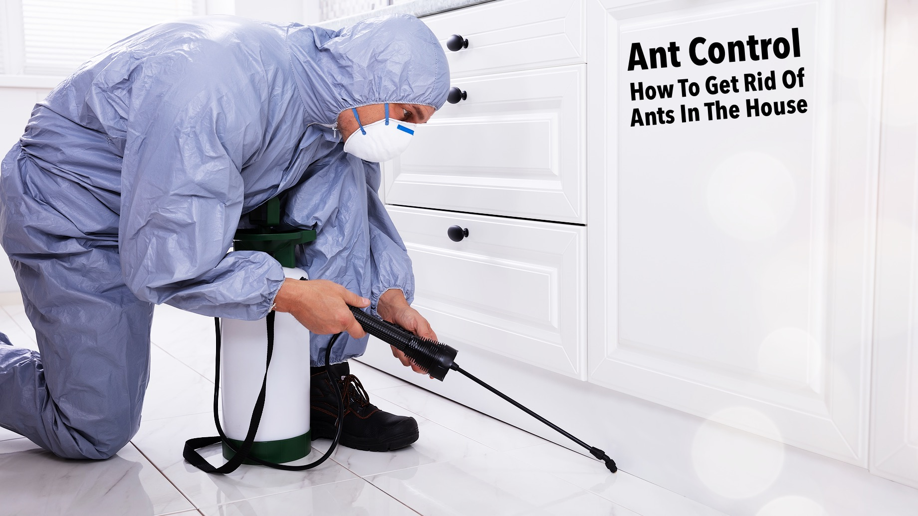 Ant Control - How To Get Rid Of Ants In The House